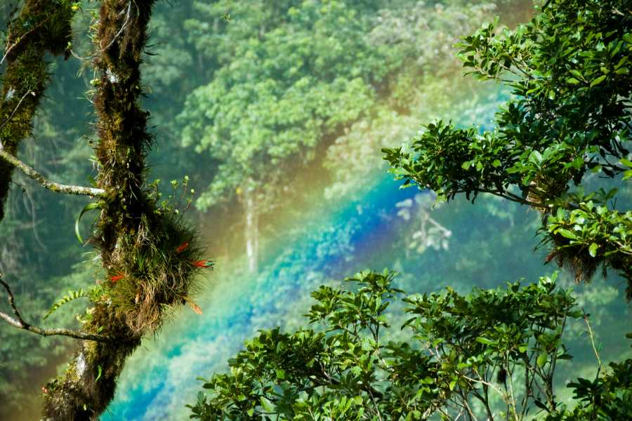 Tour Guanacaste On-Line Heliconias Rain Forest & Hanging Bridges Hike