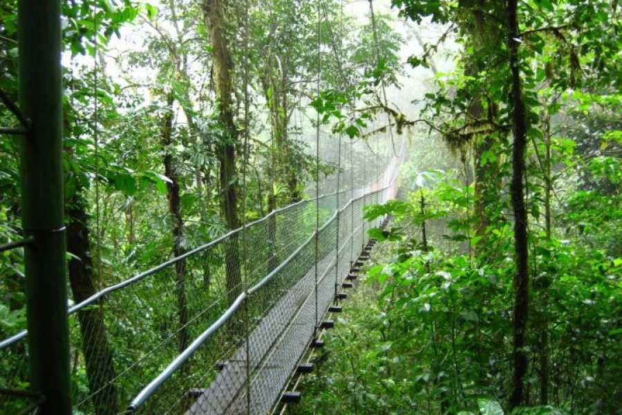 Tour Guanacaste Heliconias Rain Forest & Hanging Bridges Hike