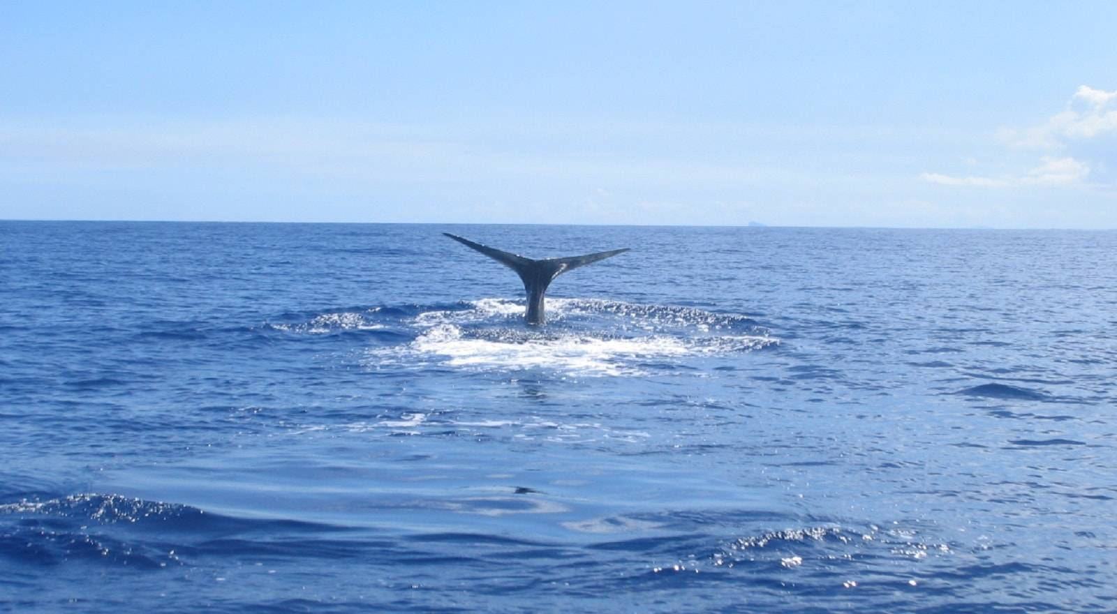 Whales Encounter, Whales Encounter, Whales Encounter