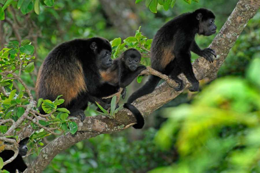 Tour Guanacaste Congo Trail Round Trip Transport