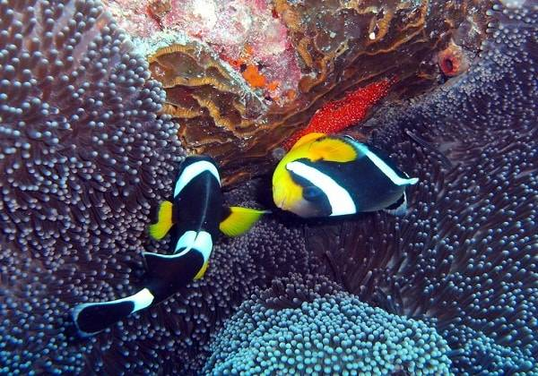 Diving Package - Mauritius West Coast