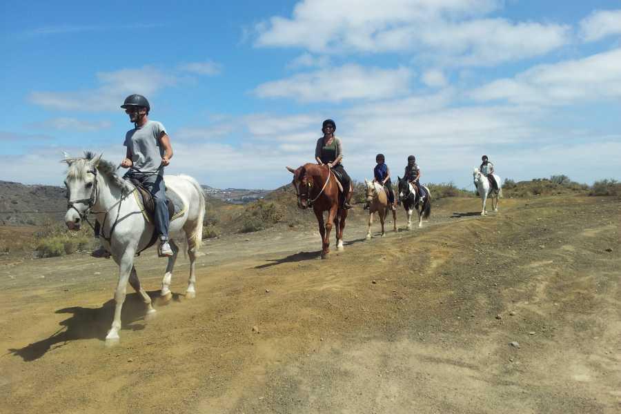 Hipica Canaria Balade à cheval d'une heure: Tour Volcanique