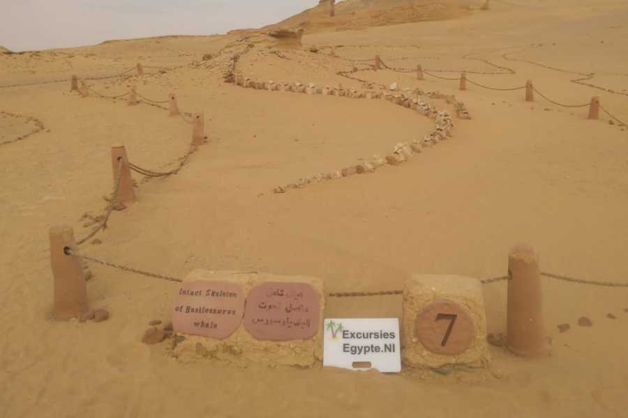 Excursies Egypte The valley of the whales two days tour from Hurghada with Camping