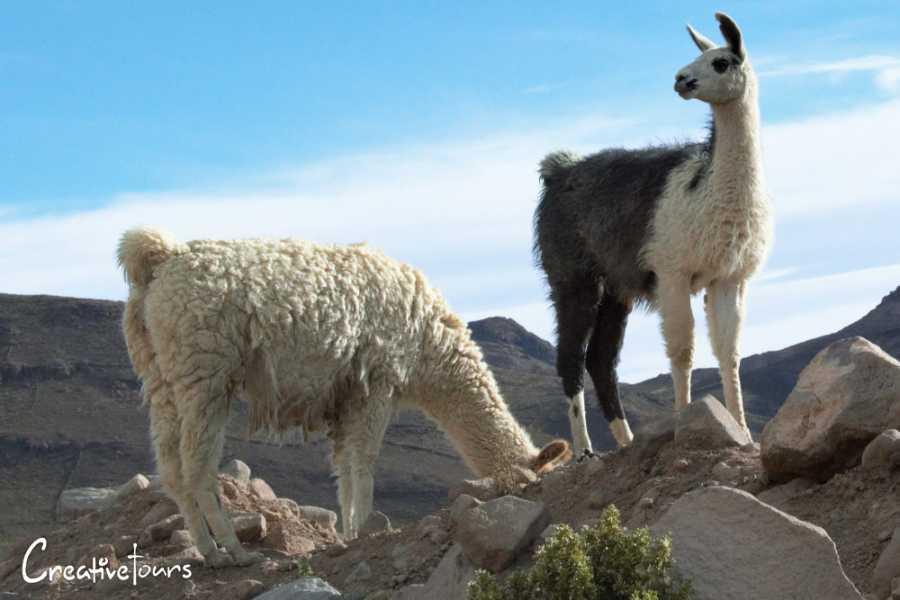 Uyuni Expeditions TAYKA ROUTE UYUNI-ATACAMA 3D (DRY SEASON)