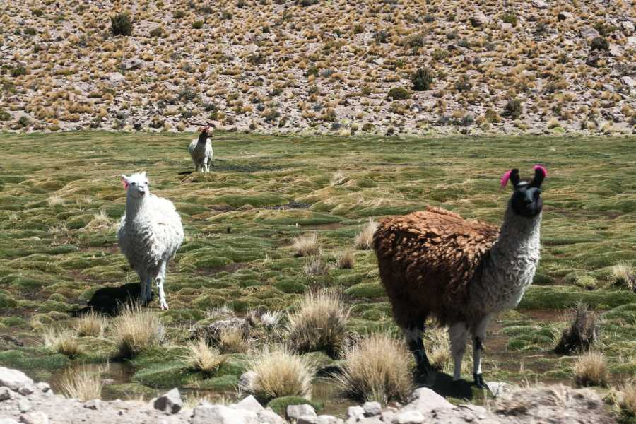 Uyuni Expeditions AUKA RUNAS ATACAMA-ATACAMA 4D / RETURN BY BUS (DRY SEASON)