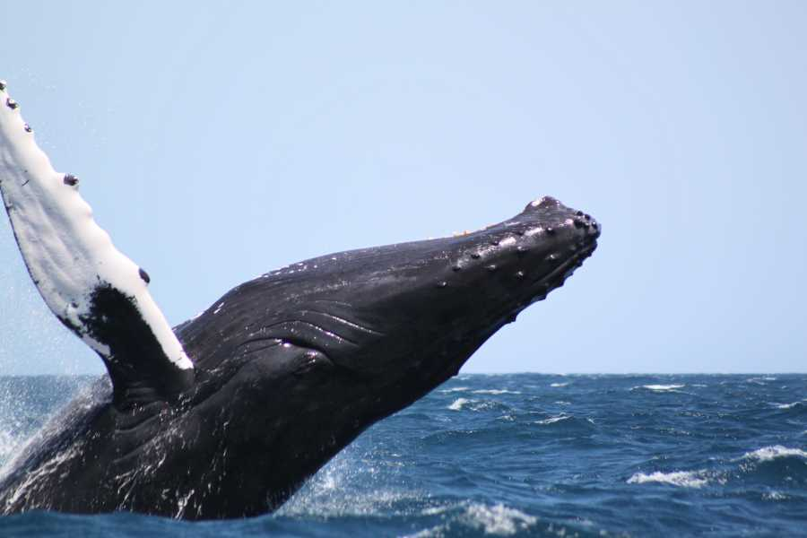 Dom Rep Tours Whale Watching