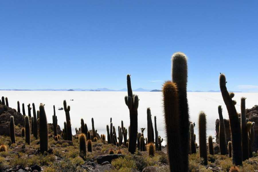 Uyuni Expeditions FULL DAY UYUNI-UYUNI 1D (TEMPORADA SECA)