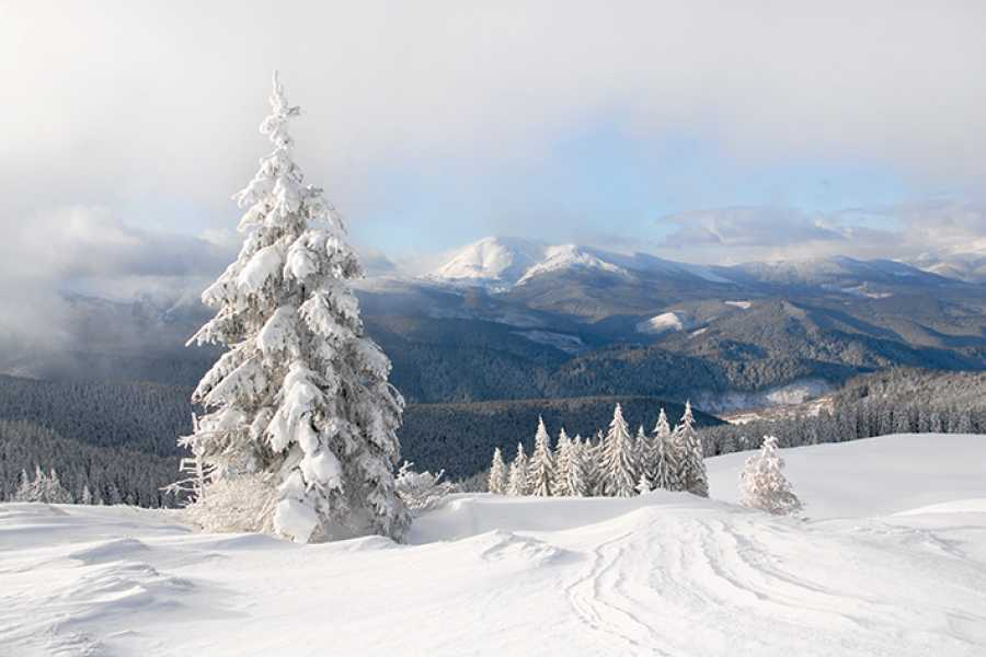 Aventour New Year in The Carpathian Mountains