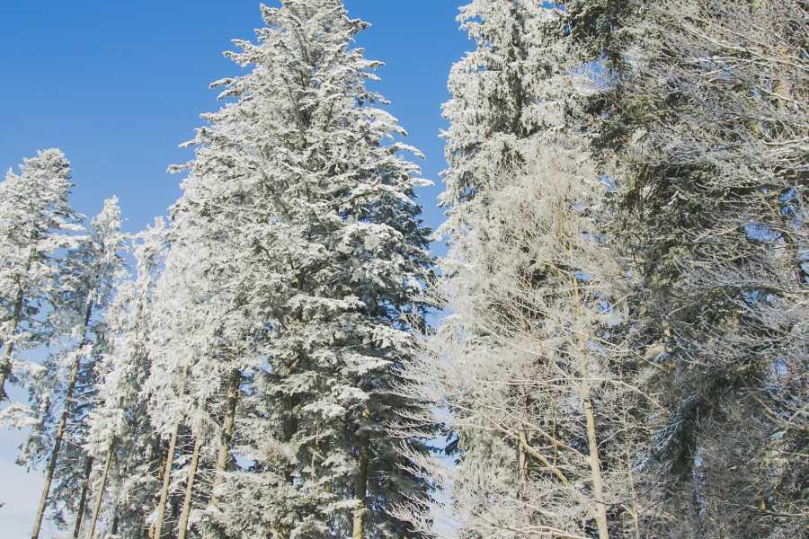 Aventour Winter Trip to the Carpathians