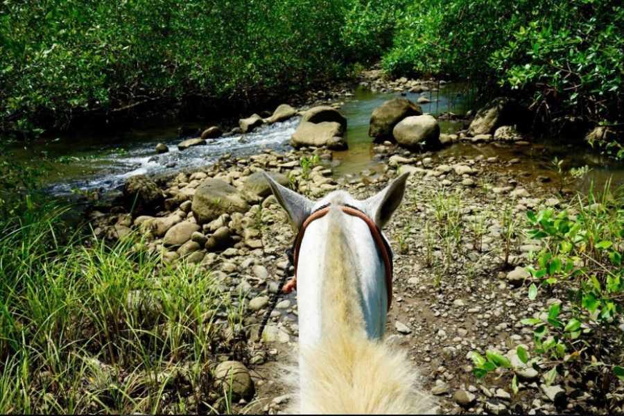 Uvita Information Center Montrer à cheval dans la forêt de la Merced Wildlife Refuge
