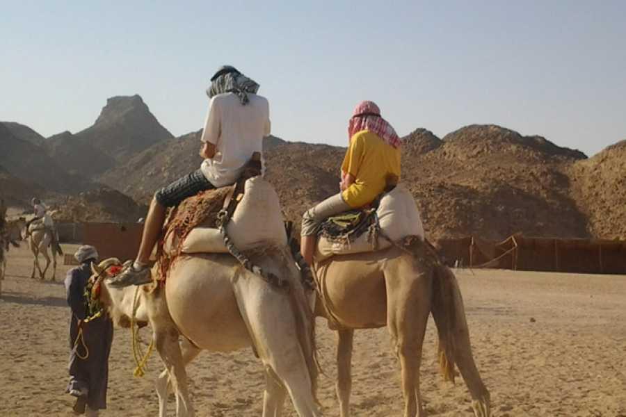 Marsa alam tours Excursion après-midi en safari en quad à partir de Makadi
