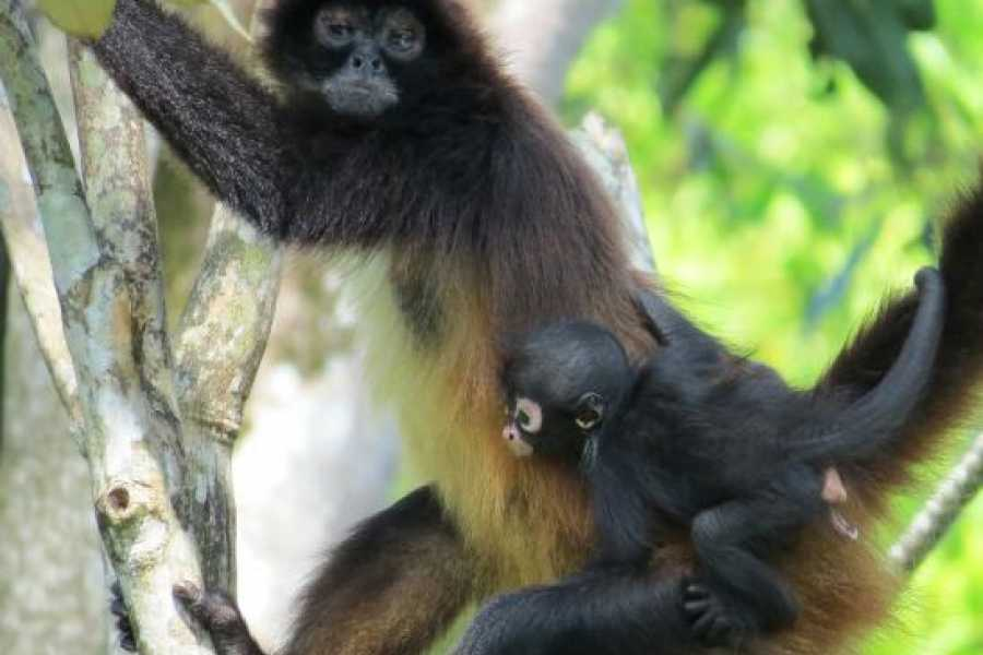 Gem Trips 07:30 Morning Lakes, Islands, Monkeys and Museums tour