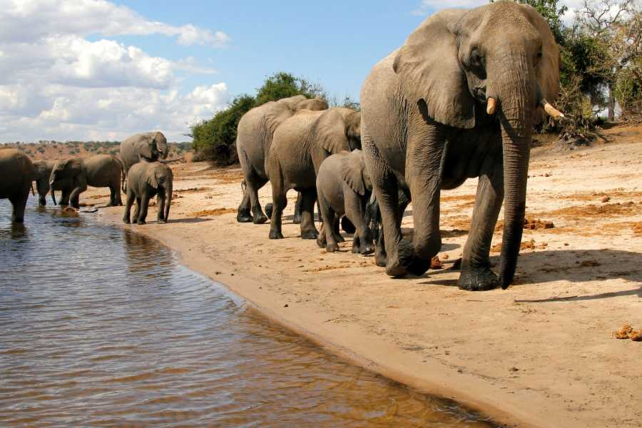 Graffiti Sotto la Lente Botswana - Okavango & Wildlife Adventure (North Route)