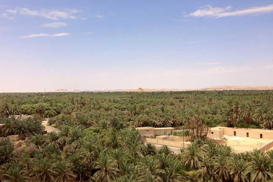 Excursies Egypte ONE NIGHT CAMPING IN WHITE & BLACK DESERTS BAHARAYA OASIS FROM CAIRO