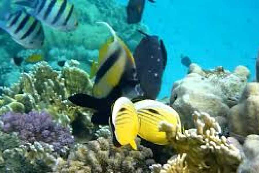 Marsa alam tours Private boat trip to dolphin from Hughada