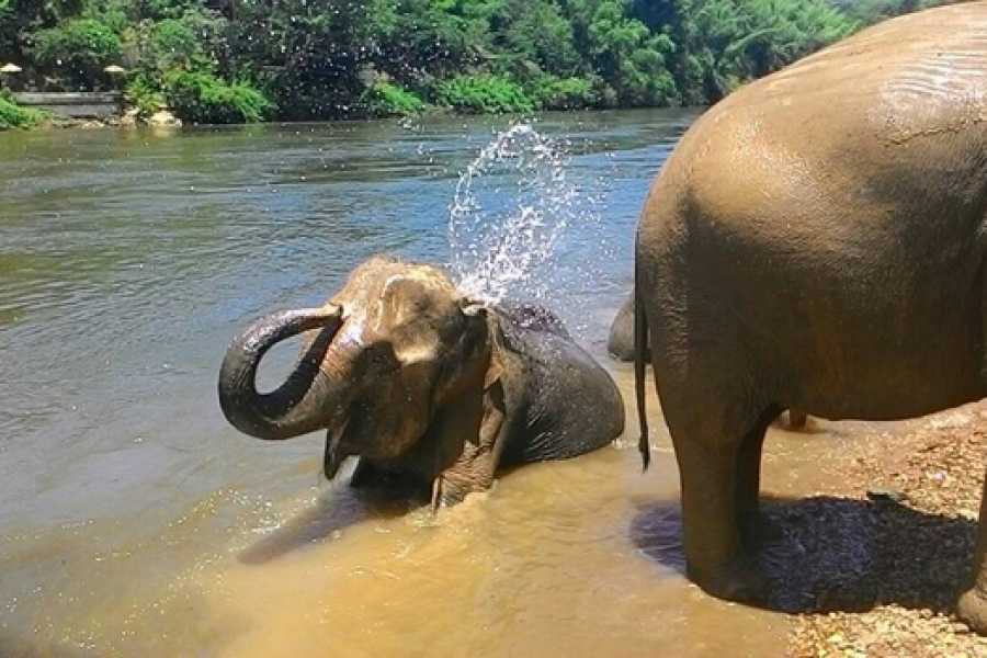 AMICI MIEI PHUKET TRAVEL AGENCY KANCHANABURI: ERAWAN FALLS AND ELEPHANT BATHING (AM094)