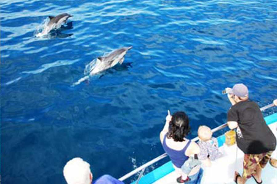 Marsa alam tours Snorkeling dolphin house from Marsa Alam