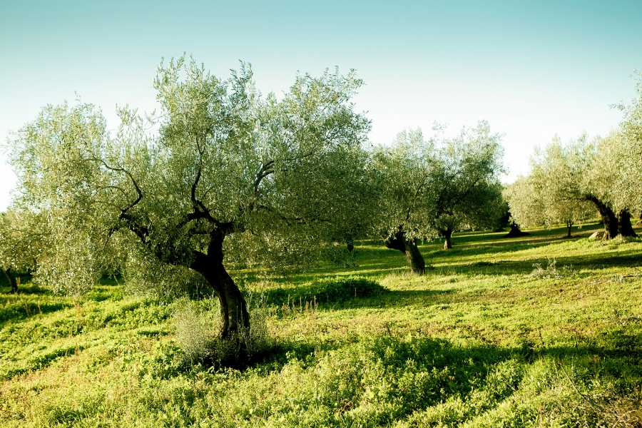 Grekaddict Olive Oil tour from Nafplio