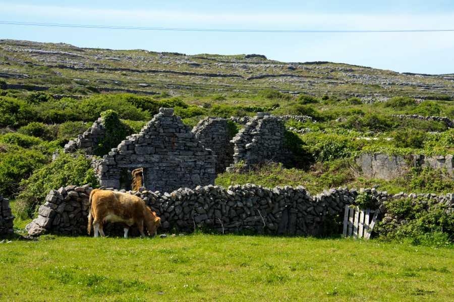 North Clare Sea Kayaking/Aran Islands Bike Tours Inishmor Bike Tour