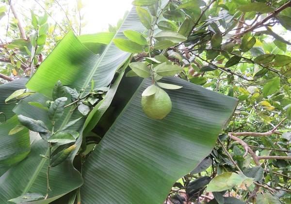 Mauritius Tropical Garden Visit