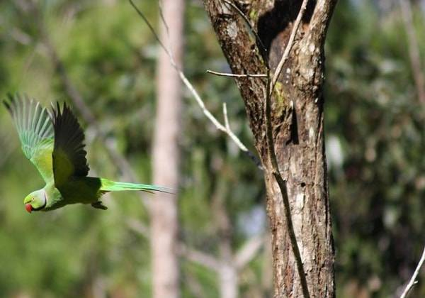 Bogenschieß-Kurs im Lavilleon Naturwald