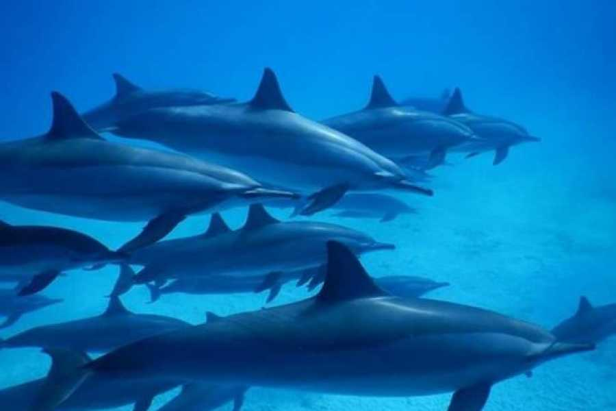 Marsa alam tours Dolphin house tour From Hurghada