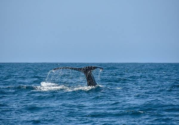 Exclusive Whale Watching Cruise, Exclusive Whale Watching Cruise