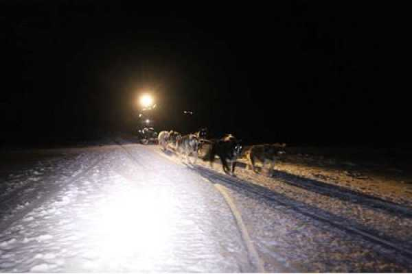 2 day Dogsledding and cabin tour in Foxdalen
