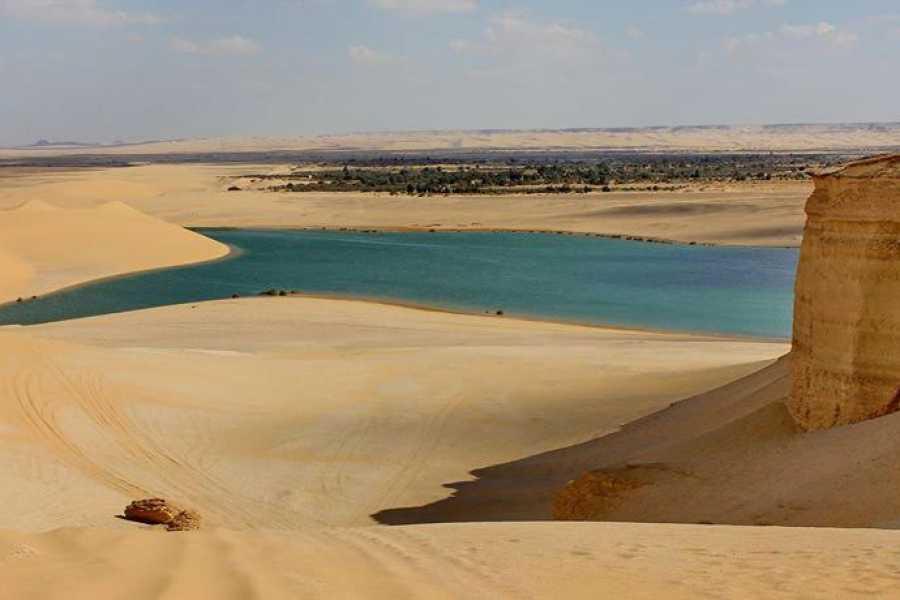 Marsa alam tours Excursion d'une nuit au Caire dans la vallée des baleines du Wadi Al Hitan
