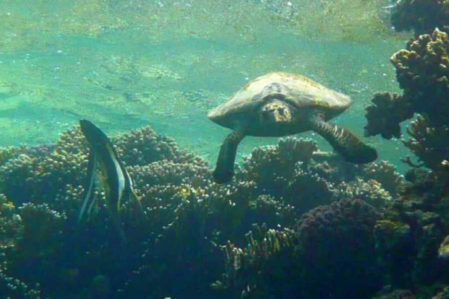 Marsa alam tours Sharm El Naga day Snorkeling Trip from El Gouna