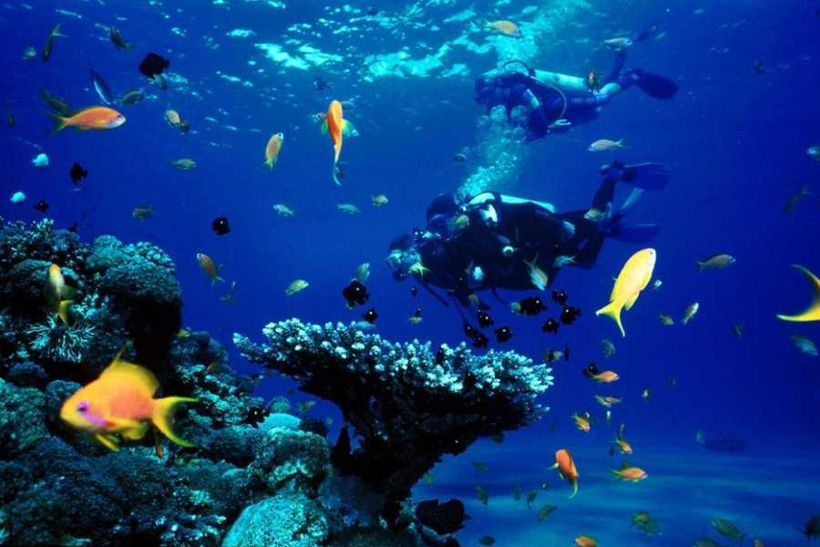 Marsa alam tours Scuba diving Trip from El Gouna