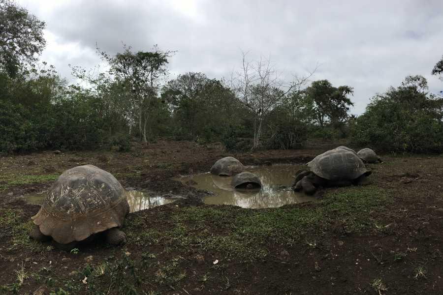 Galapagos Shuttle LLC Giant Tortoise Reserve + Lava Tube | 2PM