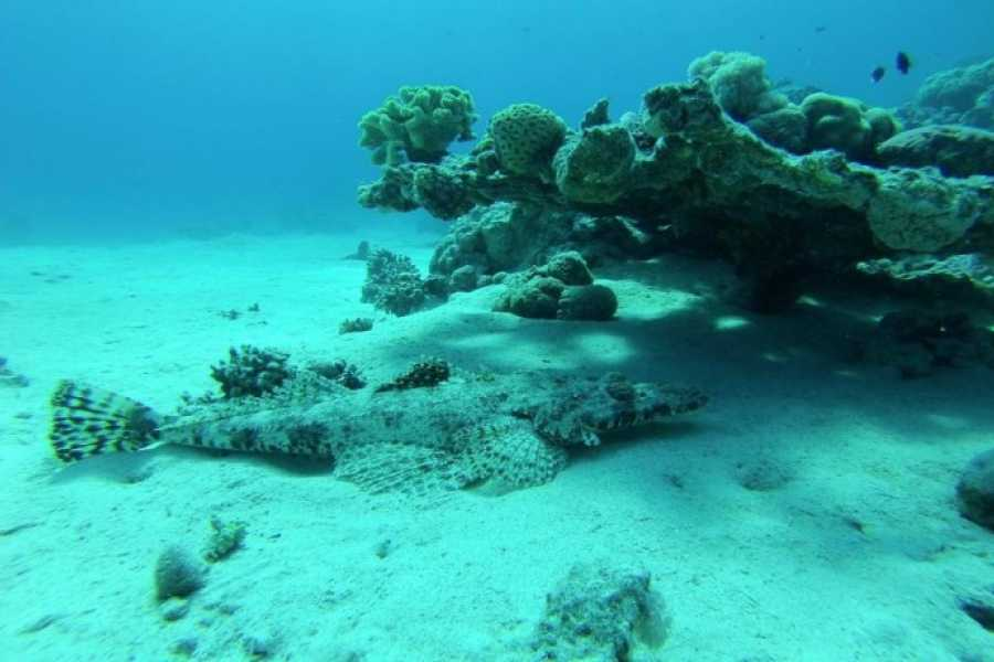 Marsa alam tours Sharm El Naga day Snorkeling Trip from Makadi
