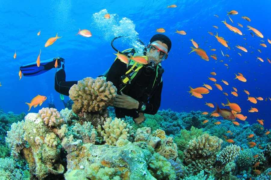 Marsa alam tours Scuba diving Trip from Makadi