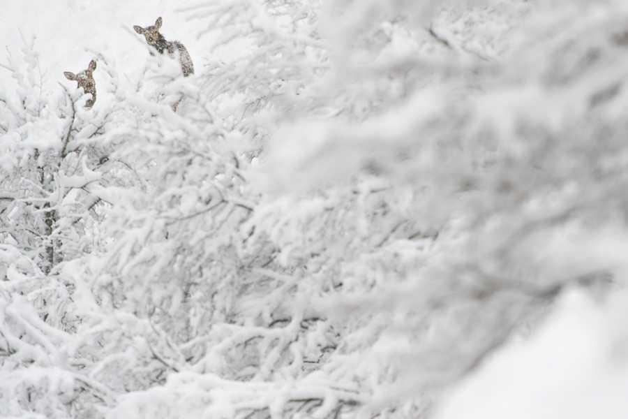 Wildlife Adventures A passo lento, con le ciaspole nel cuore dell'Inverno