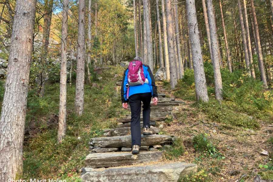 Travel like the locals (Møre og Romsdal) Buss til tur: Ta Midsundtrappene til topps