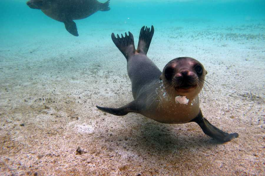 Galapagos Shuttle LLC Snorkel | Santa Fe - Playa Escondida