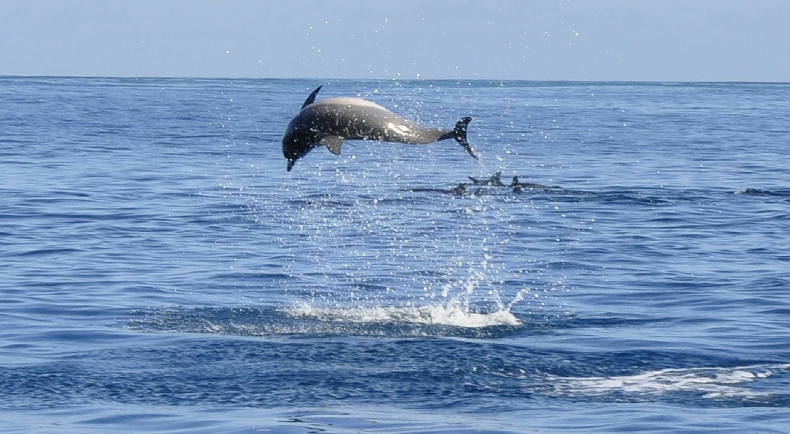 Private Dolphin Watching Catamaran Cruise