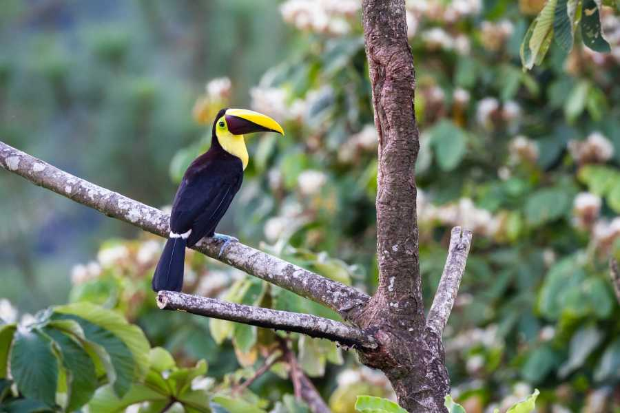 Tour Guanacaste Bird-Watching & Cultural Tour