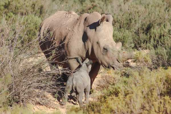 2 Day Tour: Aquila Private Game Reserve
