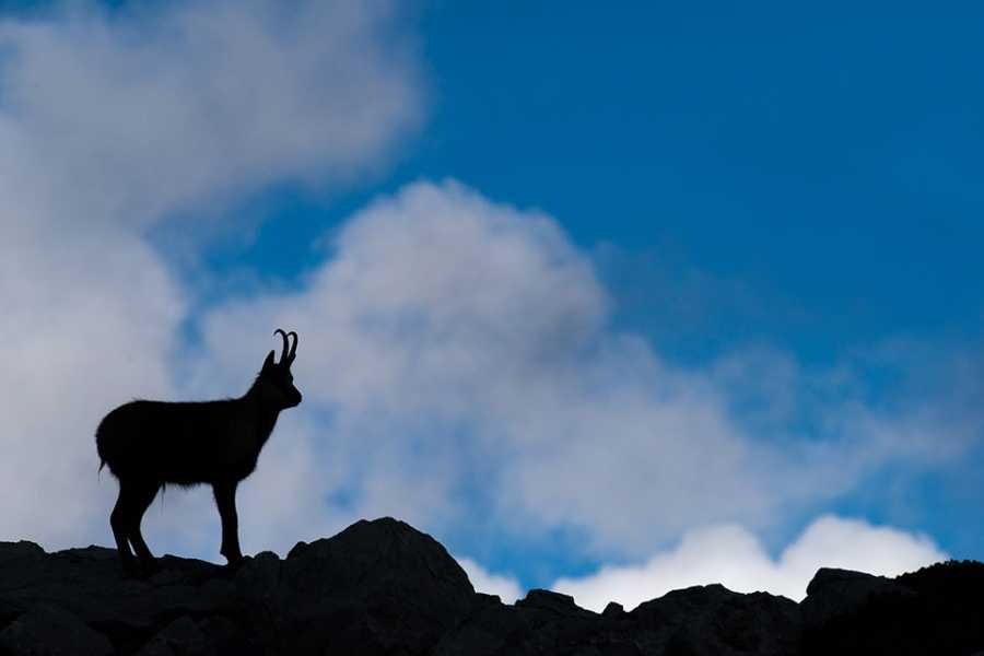 Wildlife Adventures Ciaspolata allo Stazzo di Ziomas