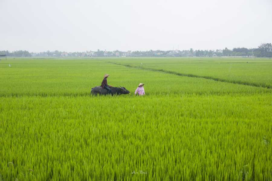 Viet Ventures Co., Ltd Photo Tour - Vietnam coastline from Saigon to Hue 10 days