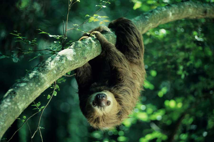 Krain Concierges Rio Celeste Waterfall & Sloth Search