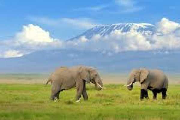13 days Adventure safari