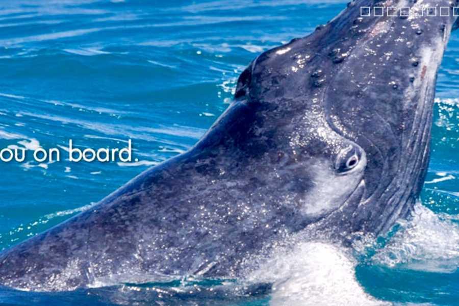 Tour Samana With Terry Whales La Romana - Bayahibe: Famous Kim Beddall of Whale Samana Whales+Cayo Levantado Island
