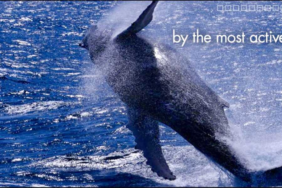 Tour Samana With Terry Whales Puerto Plata - Sousua - Cabarete - North Coast: Famous Kim Beddall of Whale Samana Whales+Cayo Levantado Island