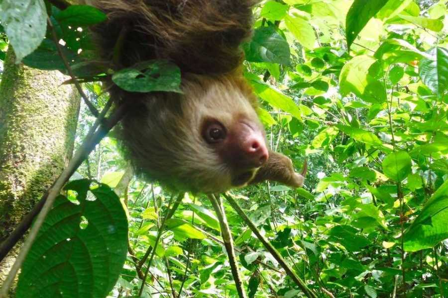 Tour Guanacaste Puma & Sloth Rainforest Journey