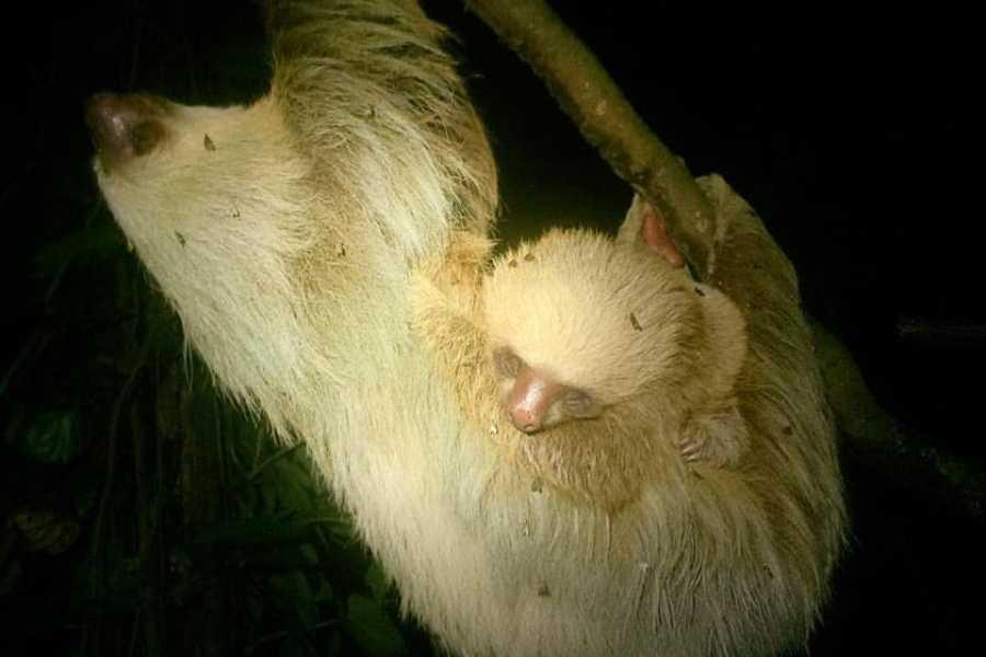 Tour Guanacaste Puma & Sloth Sanctuary Journey