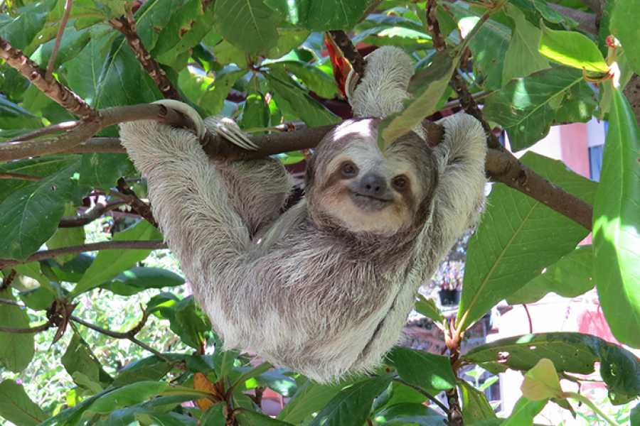 Tour Guanacaste Puma & Sloth Sanctuary Journey