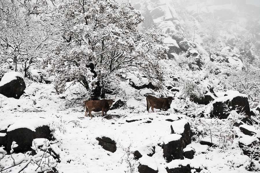 Gerês Holidays Romance en la Montaña